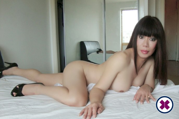 Meet the beautiful TS Anna Thai Ladyboy in Birmingham  with just one phone call